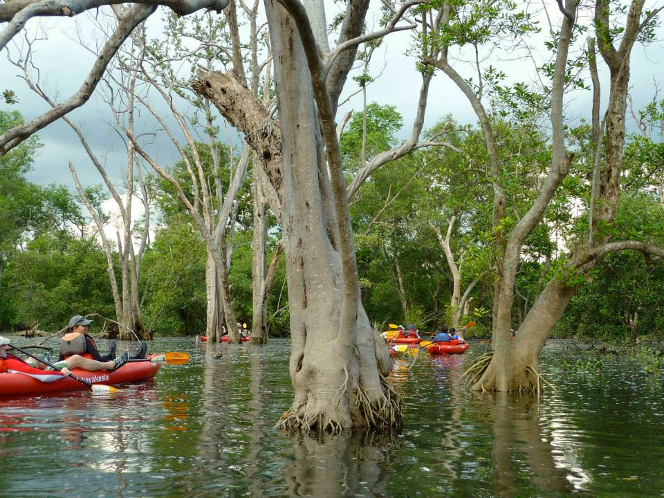 Kayaking at Mandai Flooded Forest