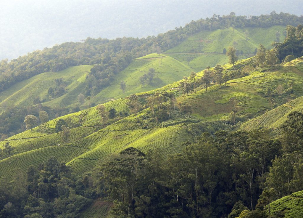 Rolling hills on Cameron Highlands